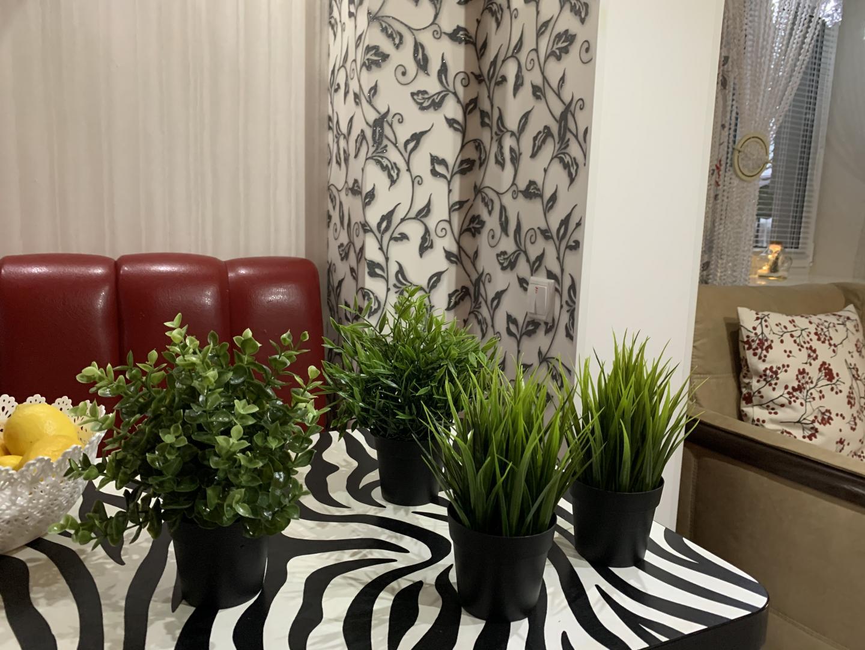 Отзыв на Topfpflanze, künstlich, drinnen/draußen Zimmerbambus, 9 cm из Интернет-Магазина IKEA