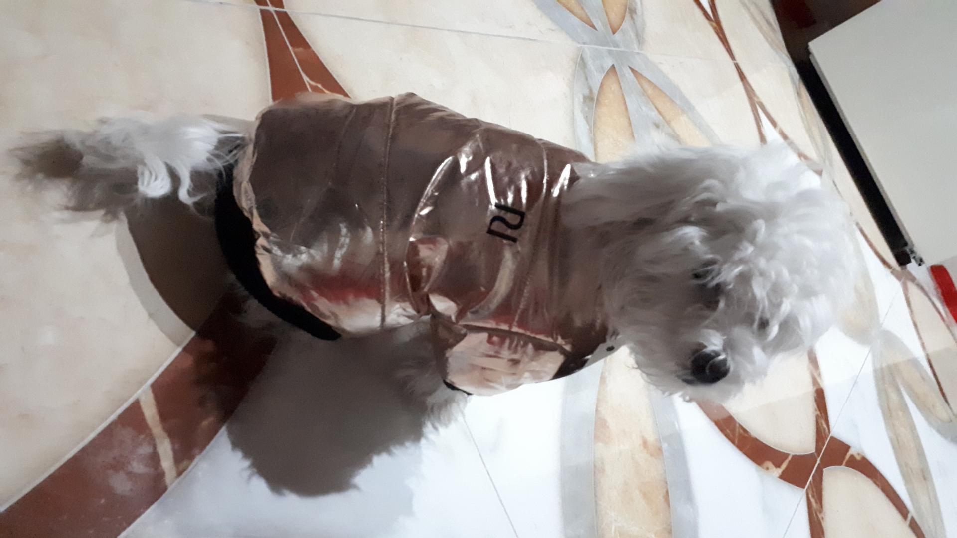 Отзыв на Золотой РИ-Daunenjacke для Собаки с Искусственный мех капюшон из Интернет-Магазина Riverisland.de