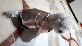 Золотой РИ-Daunenjacke для Собаки с Искусственный мех капюшон